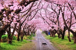【旅行攻略】首尔行之樱花季-汝矣岛